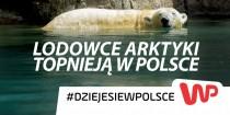 Wirtualna Polska – Kampagne