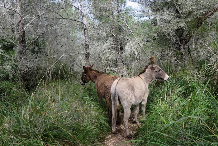 Esel auf dem Wanderweg