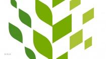 Raleigh Logo Design