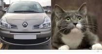 Renault Modus – Katze