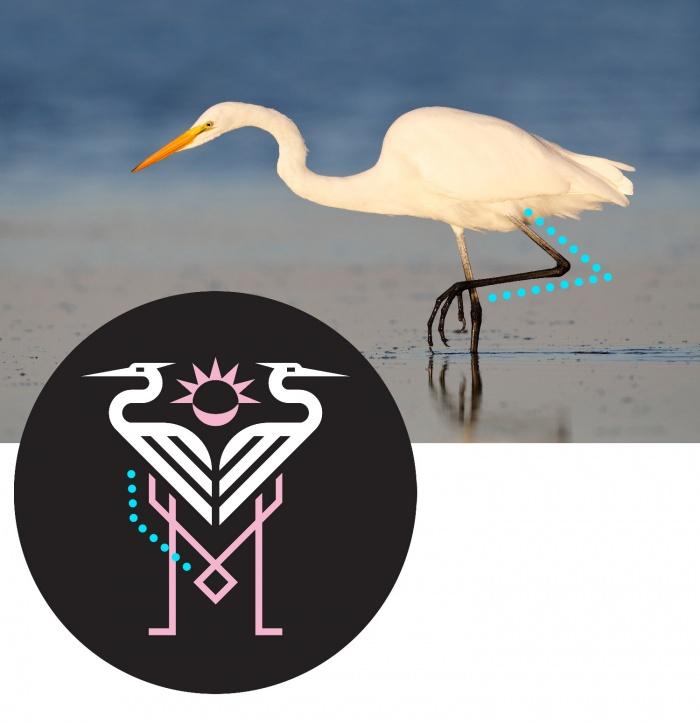 Logo Inter Miami – Silberreiher