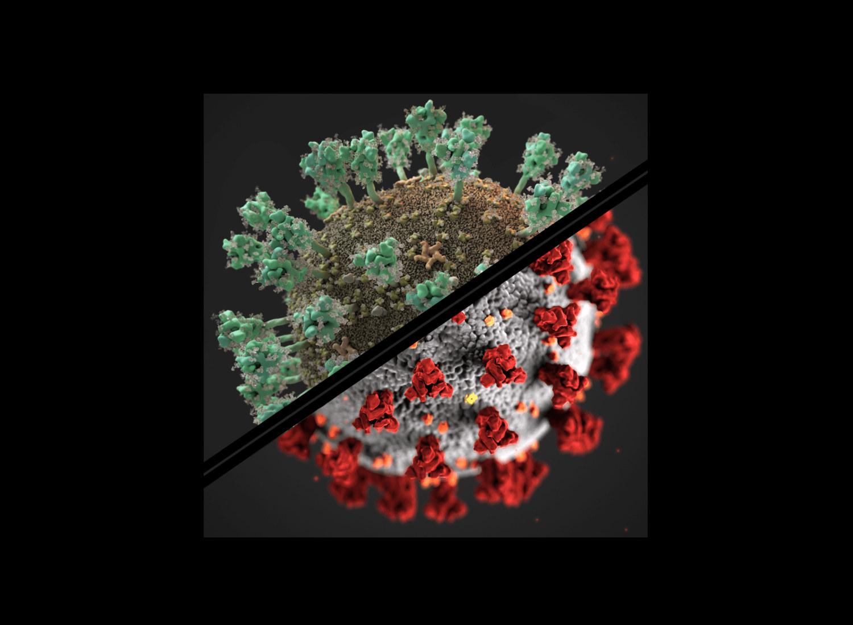Vergleich zwischen der Darstellung der Coronavirus Structural Task Force (Thomas Splettstößer / SciStyle.com) und der in den Medien häufig verwendeten Illustration des CDC, Quelle: insidecorona.net