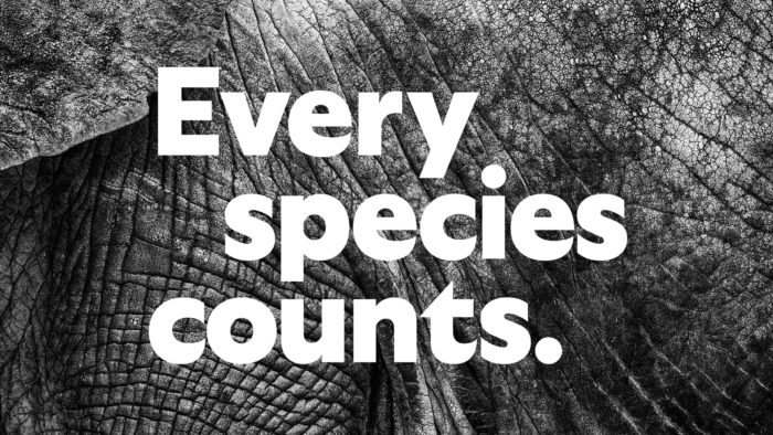 San Diego Zoo Branding – Poster
