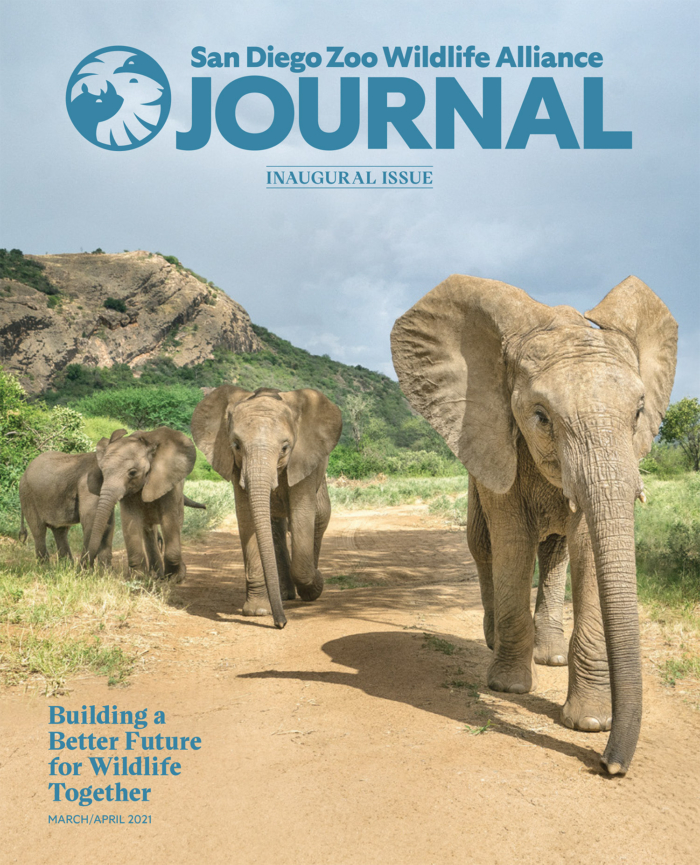 San Diego Zoo – Journal