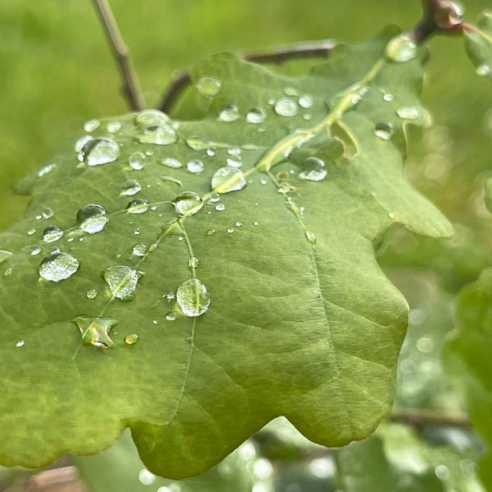 Baumpatenschaft, Quelle: Spessartbrett