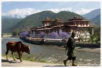 bhutan-impressionen-2