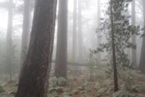 Nebel während der zweiten Etappe – GR 20